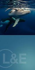 whale_Small.jpg