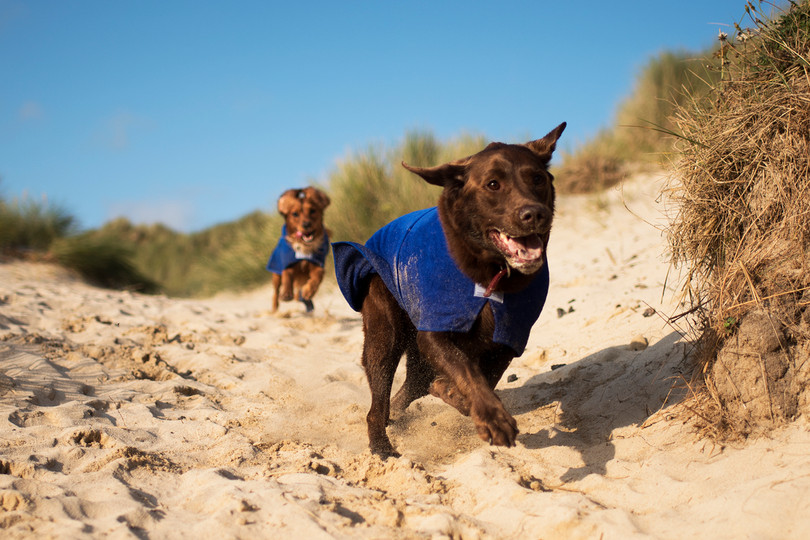 The Cornish Dog_Toby and Alexander_18.jp