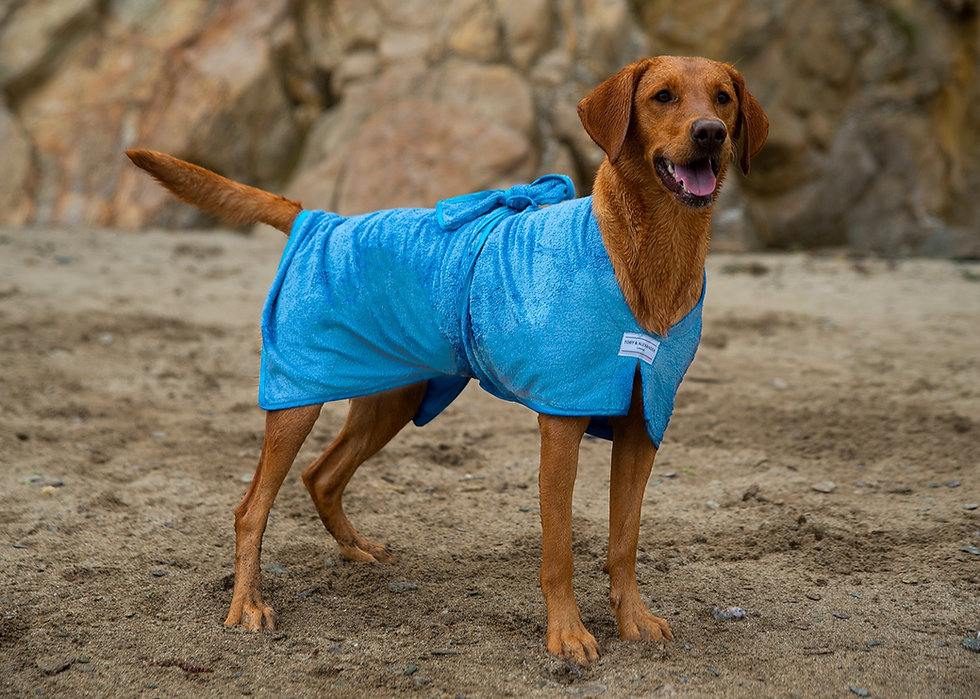 Toby and Alexander bamboo dog robe