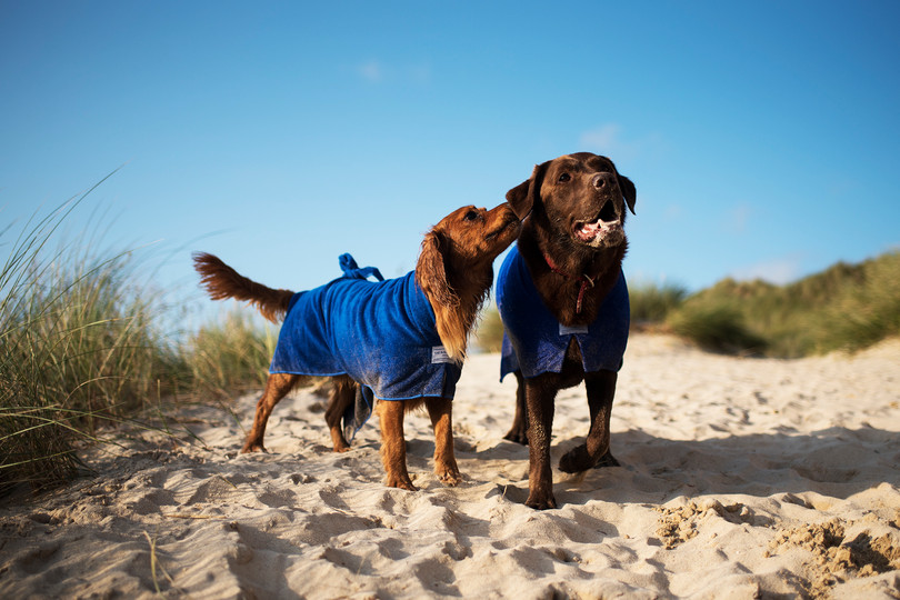 The Cornish Dog_Toby and Alexander_16.jp