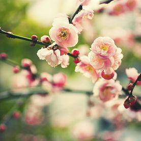 fonds-ecran-printemps-12 (2).jpg