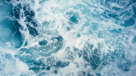 de sonar van de potvis