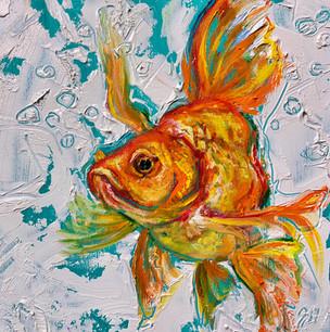 """Goldfish 1"""