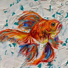 """Goldfish 4"""