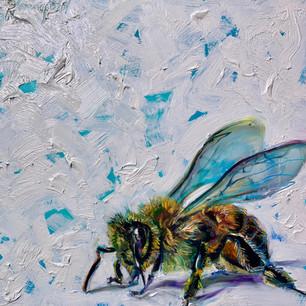 """""""Bee's Knees"""""""