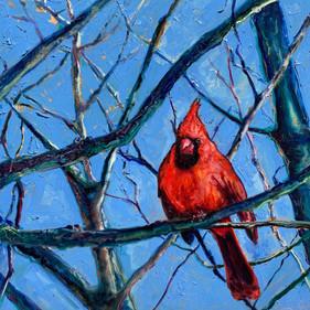 """""""Winter Cardinal I"""""""
