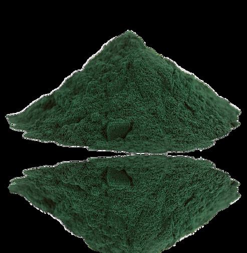 1024px-Spirulina.png