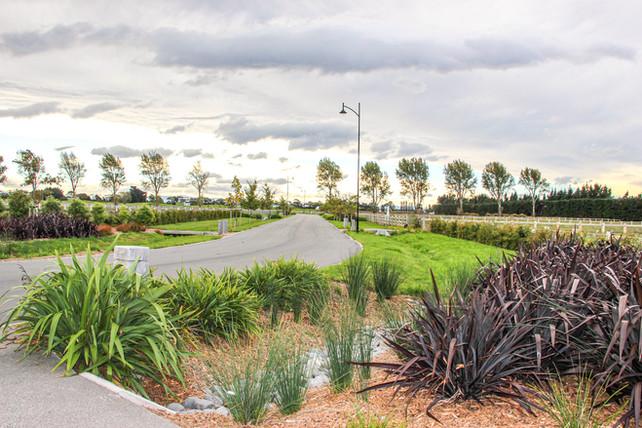 Coles subdivision swale planting design.