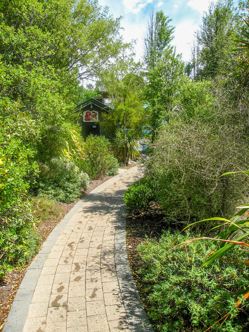Pathway and native landscape planting design at Hanmer Springs hot pools
