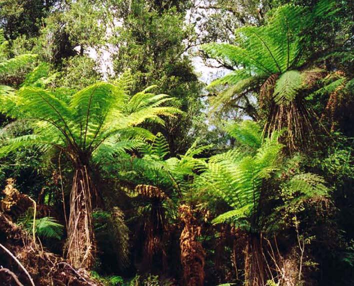 Native vegetation at Franz Joseph