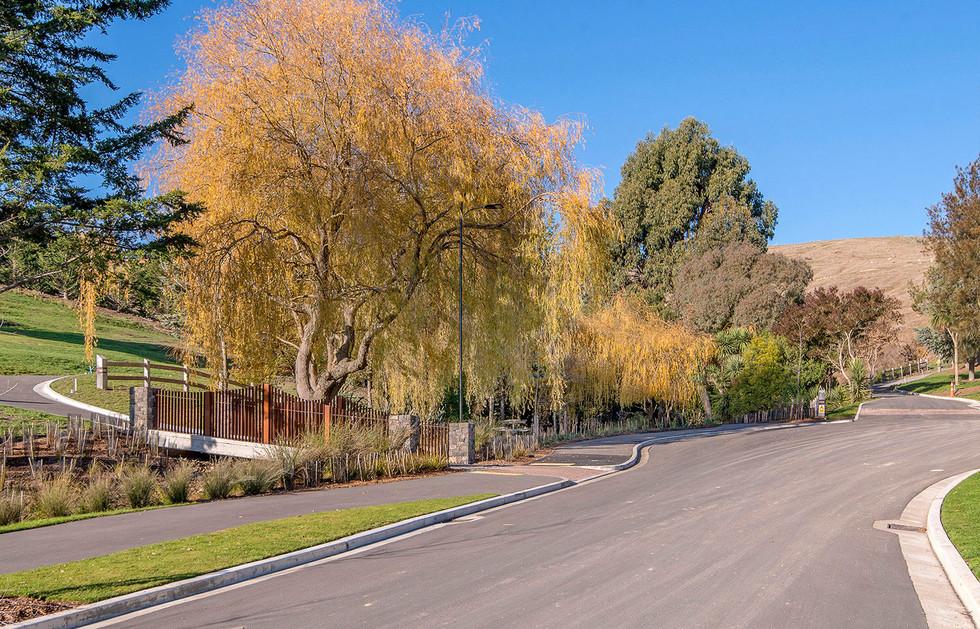 Mature trees landscape design.JPG