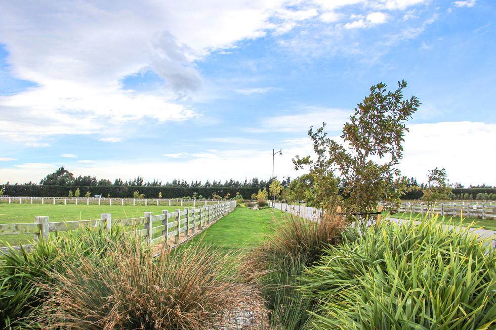 Coles subdivision raingarden planting de