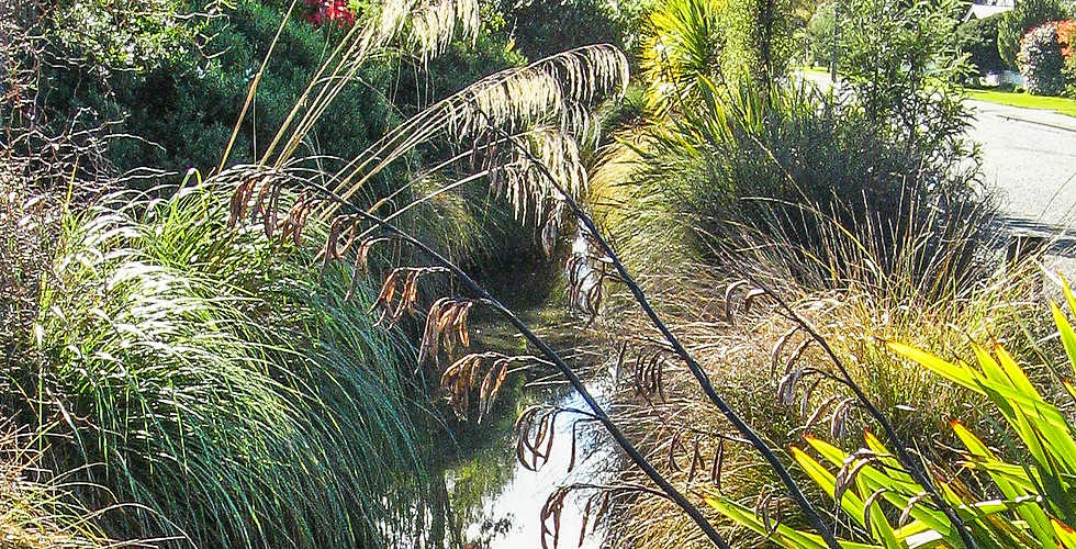 Riparian ecological restoration