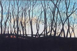 Exmoor hedge