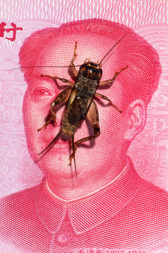 kubski_laurence_crickets_billet_1000.jpg