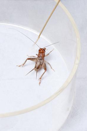kubski_laurence_crickets_warmup_1000.jpg