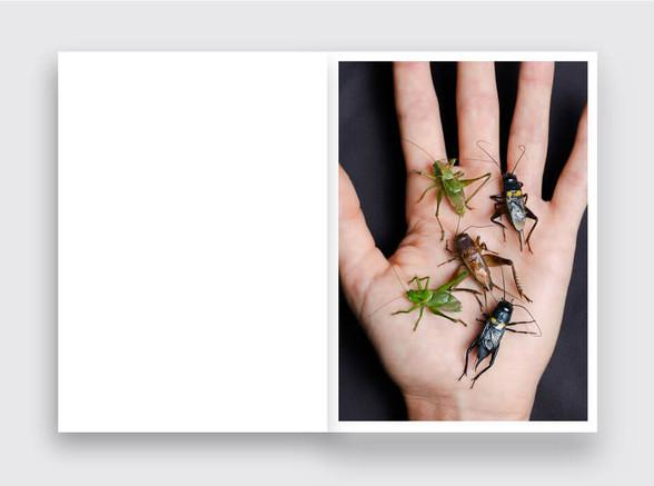 Crickets_LKubski_945x703_Spread07.jpg