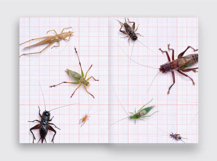 Crickets_LKubski_945x703_Spread09.jpg