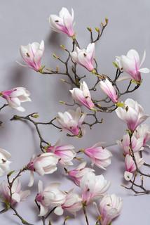 kubski_laurence_crickets_spring_1000.jpg