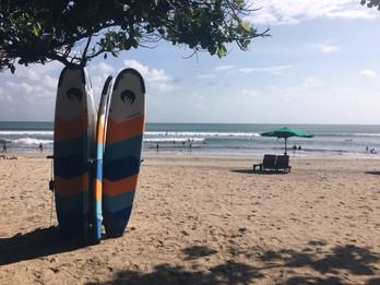 Storky o výživě - surfaři