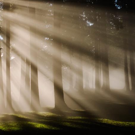 Bosques sostenibles Kährs