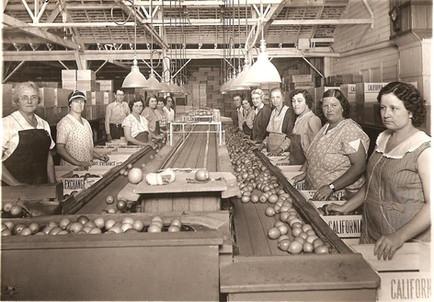 Citrus Assembly Line 1.jpg