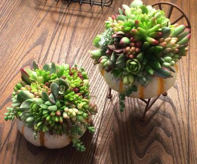 Succulent Workshops