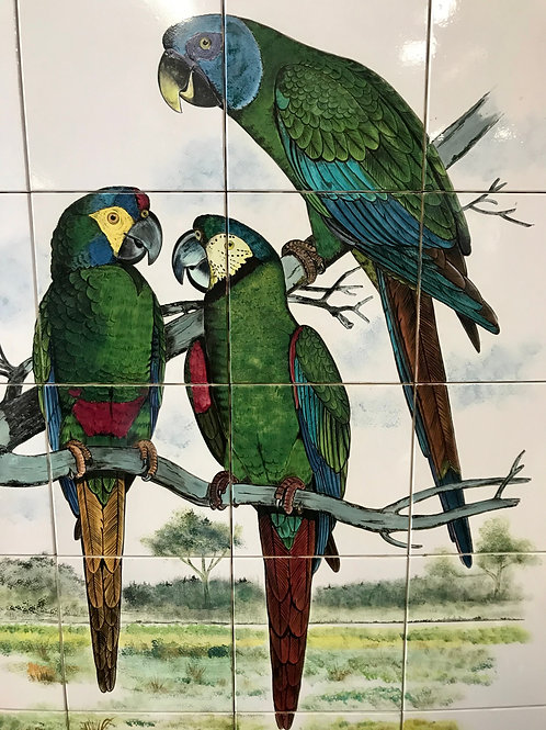 H.P. Blue Macaws on Tiles
