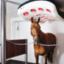 equine therapeutic heat solarium.jpg