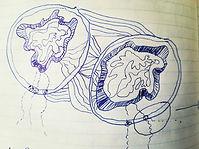 Rhizomes cellulaires.jpg