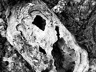 Huître préhistorique 1.jpg