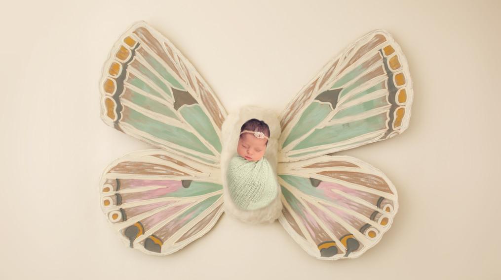 Butterfly2COPY.jpg