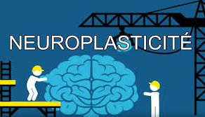 La neuroplasticité - un bel espoir d'évolution.