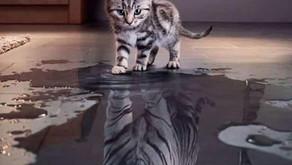 Le miroir reflète à l'extérieur ce qui est à l'intérieur de vous