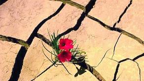 La résilience ou l'art de rebondir...