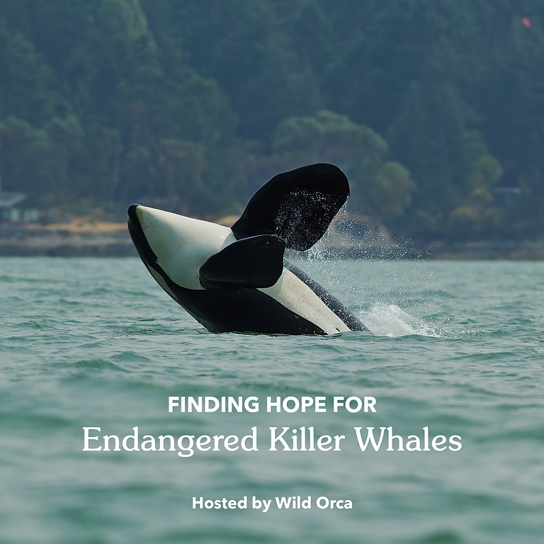 Wild Orca. & Patagonia Present: An Online Chat with Seattle Times Environmental Writer Lynda Mapes