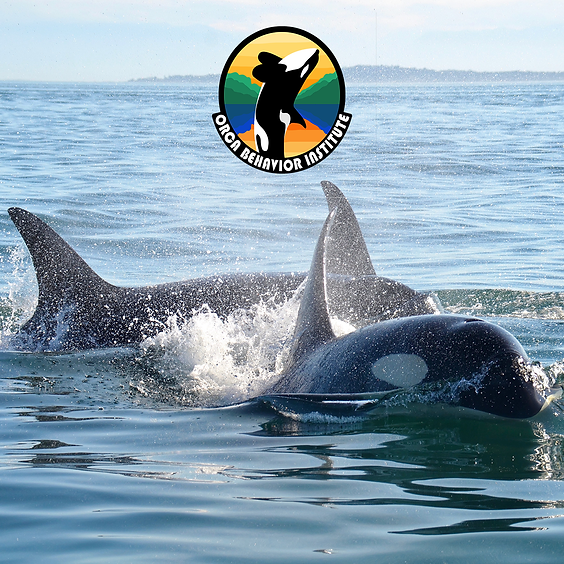 Orca Behavior Institute Presents: Familial Connections Among the Southern Residents