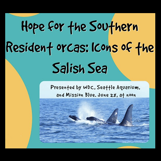 Hope for the Southern Resident Orcas: Icons of the Salish Sea