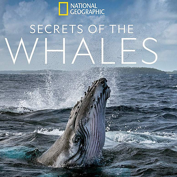 Orca Month Book Club - Secrets of the Whales