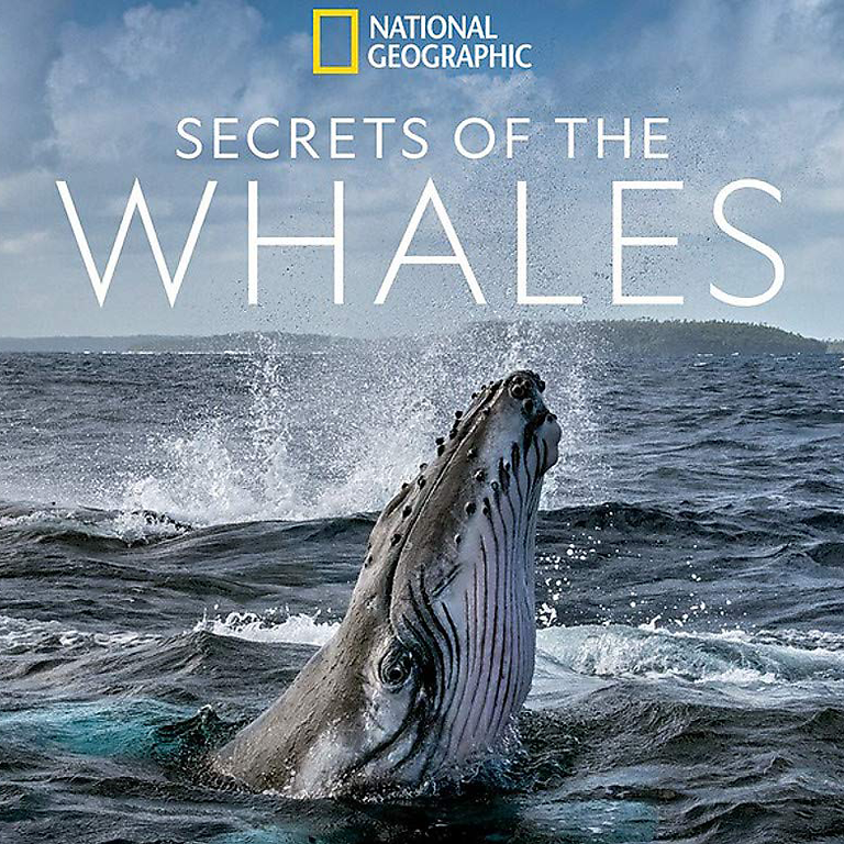 Orca Month Book Club - Secrets of the Whales National Geographic Magazine May Issue Community Discussion