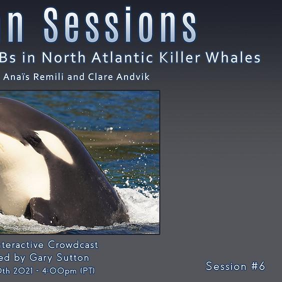 Cetacean Sessions