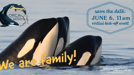 History of Orca Month
