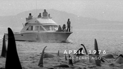 History of Orca Survey - Ken Balcomb