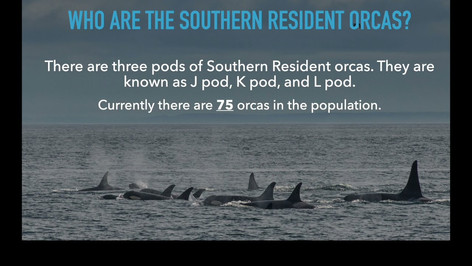 Who are the Southern Resident Orcas - Katie Jones