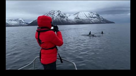 Norwegian Orca Survey - Eve Jourdain