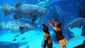 Explore The Aquarium Of The Pacific With Your Kids!