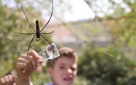 Spider Pavilion, Natural History Musuem | Fun With Kids in LA