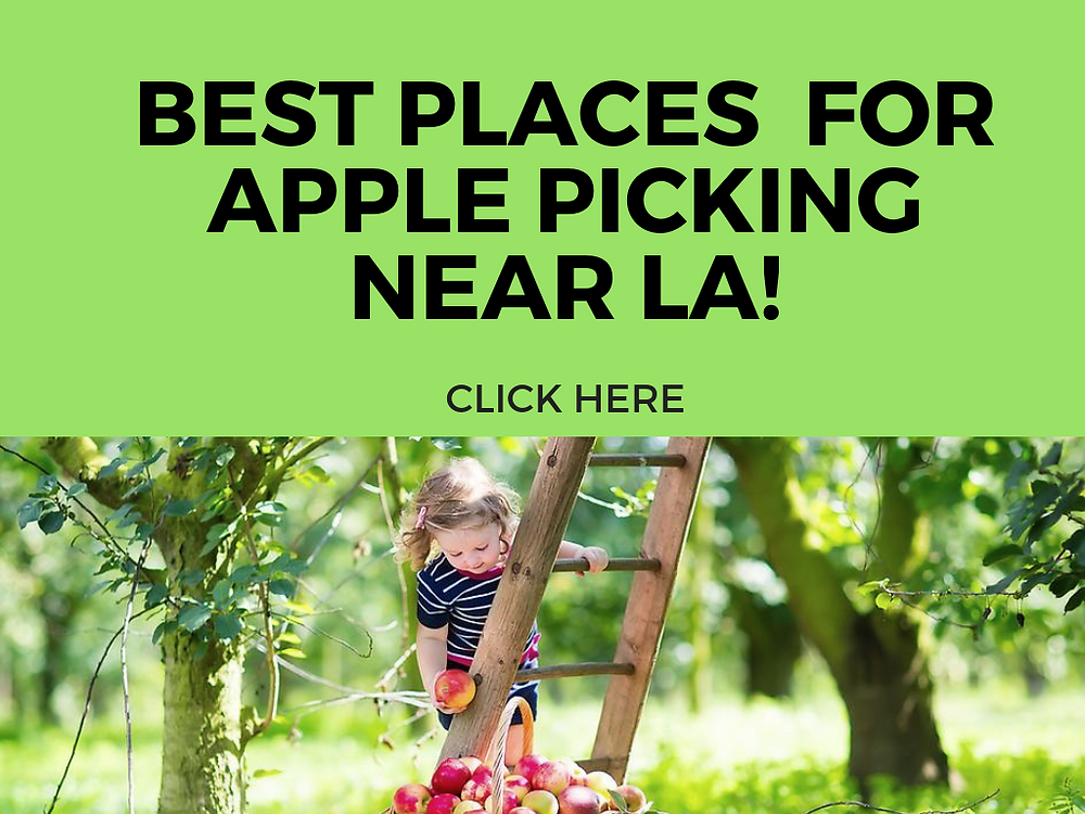BEST PLACES FOR APPLE PICKING NEAR LA WITH KIDS - FUN WITH KIDS IN LA