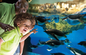 SEAWORLD SAN DIEGO - GIVEAWAY - FUN WITH KIDS IN LA