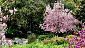 Two Botanical Gardens in Los Angeles That You Can Safely Visit Now!